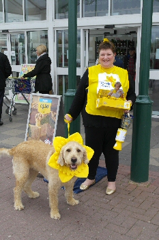 Photo: Jackie Pinkney collecting with Jimmy her Labradoodle for the Marie Curie Great Daffodil Appeal at Southport in Morrisons.