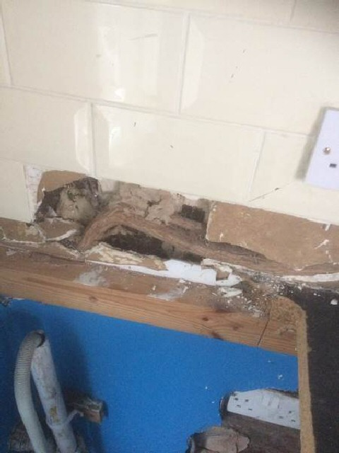 Buddleia roots from an external plant have pushed off tiles in internal utility room wall